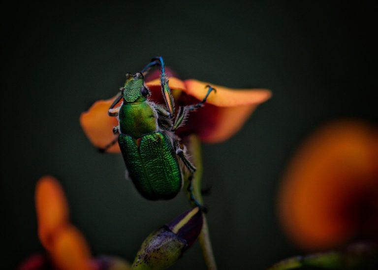 Zatrudnij doświadczoną firmę do zwalczenia plagi insektów