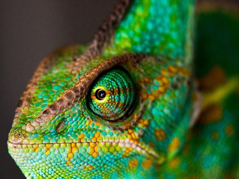 Właśnie wyposażasz terrarium dla swojego gekona?