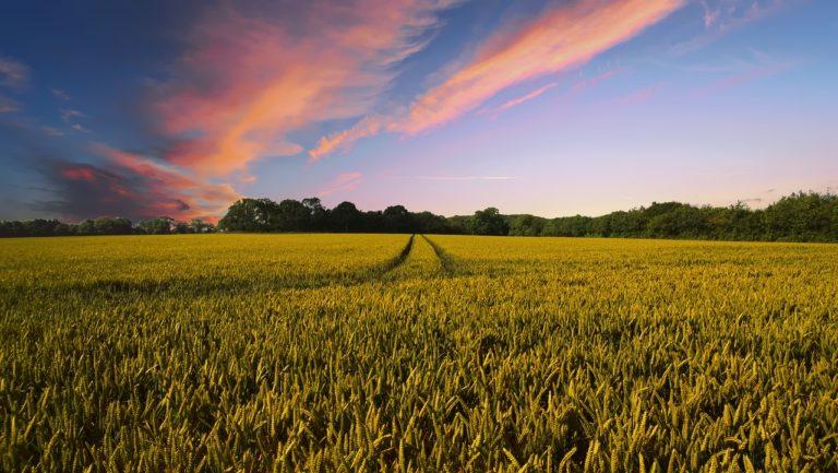 Czy poszukujesz dobrego portalu rolniczego?