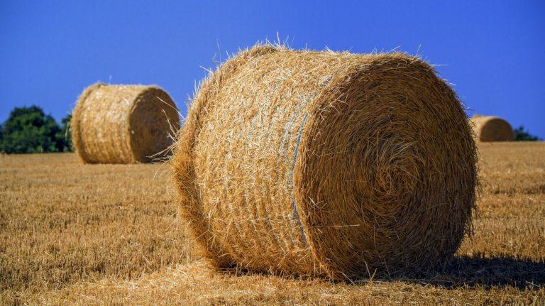 Chwasty w uprawach rolnych